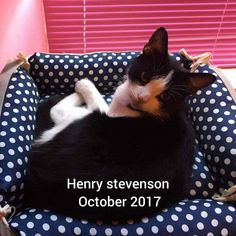 Henry going for a sleep in one of his beds