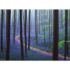 15+ Mysterious Forests You'd Love To Get Lost In ❤ liked on Polyvore featuring backgrounds