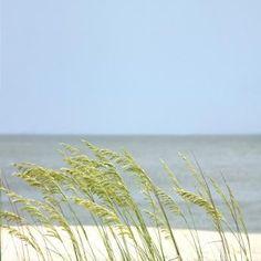 Beach RV Camping in Gulf Shores AL