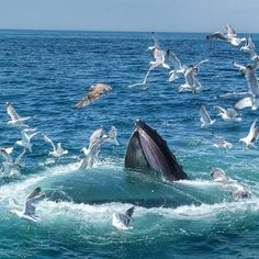 Whale Watching with Boston Harbor Cruises