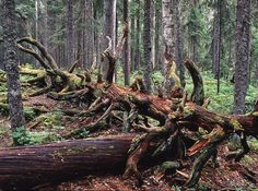 Baltic Sea, Forests, Arctic, Conservation, Lakes, Finland, National Parks, Wood, Nature