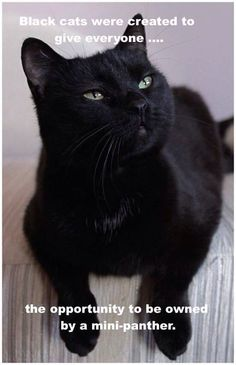Black cats are the best!