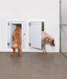 Luther Kennel Kurunda Kennel Beds (like at the shelter) and Weather-Seal Pet Doors - LOVE the design - is exactly what we'd like to accomplish with a doggie door for the garage Smart Dog Door, Diy Doggie Door, Best Dog Door, Pet Door, Big Dogs, Large Dogs, Large Dog Breeds, Dog Runs, Pet Life