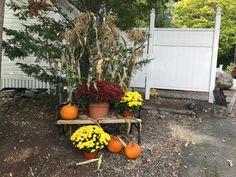 Falling into Fall Cottages, Pumpkin, Vegetables, Fall, Plants, Color, Autumn, Cabins, Pumpkins