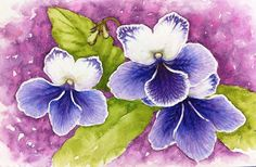 Shown very much still in progress, this is a small water color of Streptocarpus Bristol's Water Bug.  I really need to finish this little painting.