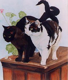 Black & White Cats | Animals And Birds | Keli Clark