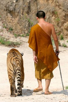 Wow... Tiger and Monk