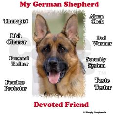 This is my favorite breed of dog