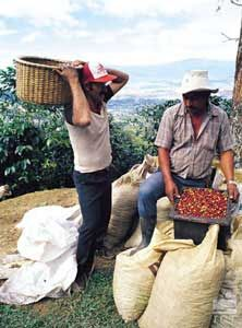 Costa Rica Grown Coffee