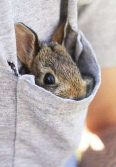 I want to just hide in your pocket like this and be with you all the time.