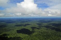 Floresta amazônica reduz capacidade de absorção de dióxido de carbono