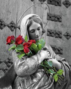 Rosas Color Rojo