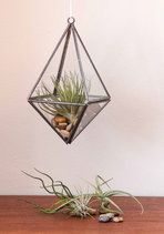 No matter the weather, you can exercise your green thumb with help from this glass terrarium! Your prized plants are welcome to thrive when you place them in the pointed base of this 3-D prism. Hang it beside the kitchen window, then let your year-round gardening skills shine!