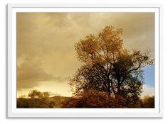 Alex Hoerner, Oak Tree, New Mexico
