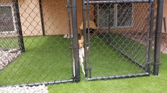 Synthetic Turf Sales and Installation Pet Grass, Artificial Turf, Dog Runs, Ladder Decor, Colorado, Outdoor Structures, Pets, Astroturf, Aspen Colorado