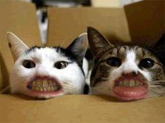 No te gusta lavarte los dientes? Este gato obsesionado con el cepillo te inspirará