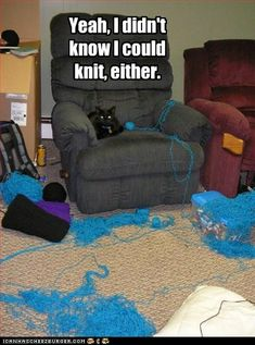 And this is why I don't leave yarn out, haha. Not to mention they'd just eat it and that would be a bigger issue...