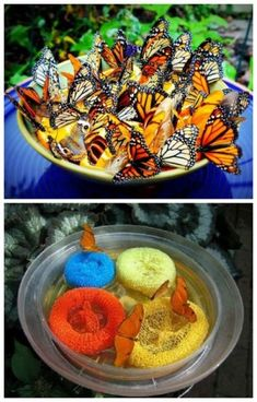 Gardening Tips Make butterfly feeder for garden easy projects) - Craftionary - Butterflies not only add to the beauty but they also pollinate our flowers. Make handmade butterfly feeder to attract butterflies to your garden with kids. Garden Crafts, Garden Art, Garden Design, Garden Ideas, Backyard Ideas, Diy Garden Projects, Backyard Birds, Butterfly Feeder, Butterfly Food