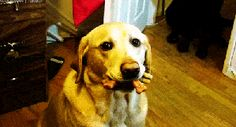 Pet Dog Pictures Funny Gif #6301 - Funny Dog Gifs| Funny Gifs| Dog Gifs