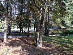 Ardilla en el parque Isabel la Católica