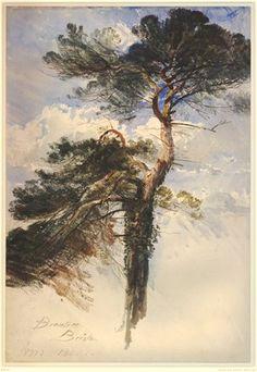 Study of red fir, Brentree, Bristol. 1842 Watercolour