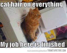 @Teresa Miller this is why kitty goes to the laundry room..