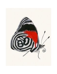 Butterfly Wall Art Print Annas Eighty Eight 83 X 117
