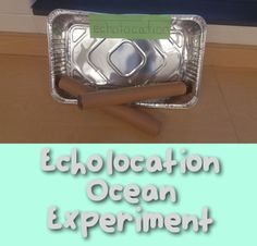 Fun and EASY ocean experiment for kinders. Perfect kindergarten science experiment. Students explore echolocation through this fun activity!