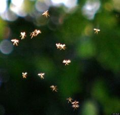 #BreakingNews - Do you believe in Fairies? These look real to me! http://goo.gl/dbD2WD via The Huffington Post