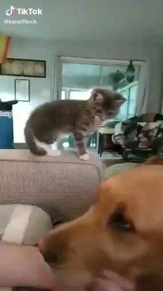 Cute Little Animals, Cute Funny Animals, Funny Cats, Cute Animal Videos, Cute Animal Pictures, Cute Puppies, Cute Dogs, Gato Gif, Cute Cats And Kittens