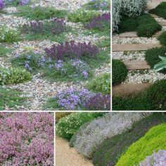 10 couvre-sols persistants qu'il faut avoir dans son jardin!