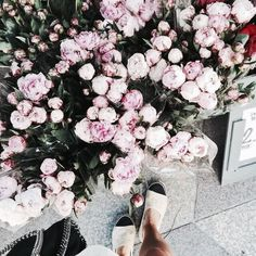 Peonies White Peonies And Flower On Pinterest
