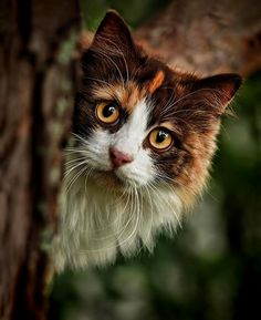 If the woods is were you live, your cat will be the wildest companion you'll meet, and wild  Is its true instincts to be.
