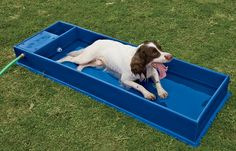 Cooling dog pool, fills its self and won't overfill. This is cool! Their website doesnt work but i will find this somewhere!!