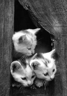 kitties peeking