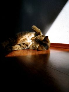 .kitty in the warmth of a ray from the sun.