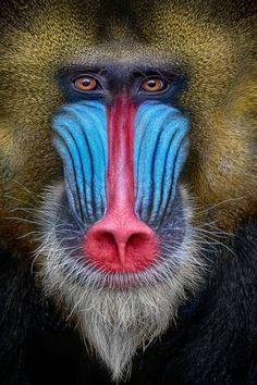 Rare Animals, Jungle Animals, Animals And Pets, Strange Animals, Wildlife Photography Tips, Animal Photography, Light Photography, Primates, Mammals