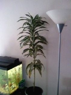 House Plant Identification Guide By Picture