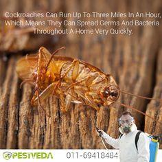 Get Rid of Cockroaches Today!! Contact- 01169418484 Visit- www.pestveda.com #pestcontrol #pestcure #cockroachcontrol