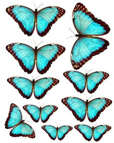 Furniture decals shabby chic french image transfer vintage turquoise blue butterfly insect antique home diy crafts scrapbooking card making Butterfly Crafts, Vintage Butterfly, Blue Butterfly, Printable Butterfly, Butterfly Images, French Images, Paper Art, Paper Crafts, Diy Crafts