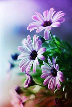 Bloemen.