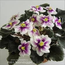 Rob's Boondoggle - зацветает, после цветения потребует заглубить стволик