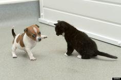 Good Morning! Cute puppies p.   Free #Kindle #Books http://www.globalgrafxpress.com/goldmembersclub