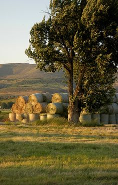 Hay bales and a golden sunset over a field. It doesn't get much better than that. Country Charm, Country Life, Country Girls, Country Living, Country Style, Country Roads, Looks Country, Hay Bales, Country Scenes
