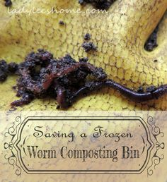 Come and learn all that you need to know in order to make compost at home with worms. Also, find out how we saved a worm composting bin that was left outdoors in freezing temperatures. #LadyLeesHome