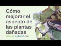 Cómo mejorar el aspecto de las plantas dañadas | facilisimo.com - YouTube