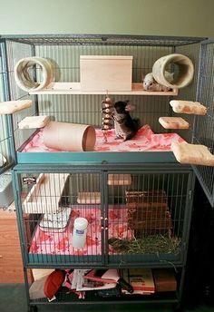 Lovely symmetrical chinchilla cage setup.