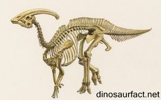 A compilation of the best Parasaurolophus illustrations, facts, fossils, and maps. See how it lived in North America during the Cretaceous period. Dinosaur Skeleton, Dinosaur Art, Dinosaur Drawing, Skeleton Tattoos, Skeleton Art, Prehistoric Dinosaurs, Prehistoric Creatures, Dinosaur Illustration, Animal Skeletons