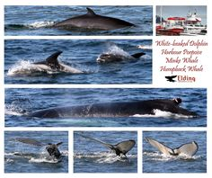 Whale watching trip Tiny Iceland went on April 2012. We got many great photos #Iceland