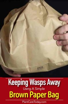 Can You Really Use A Brown Paper Bag To Keep Wasps Away?
